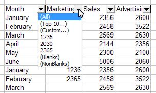 Excel Filter: AutoFilter example 2